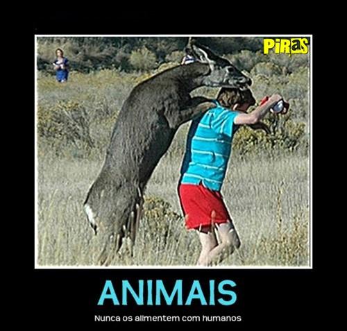 piras placas motivacionais fail animais